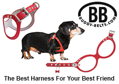 Advertisement - Buddy Belts - http://www.buddy-belts.com